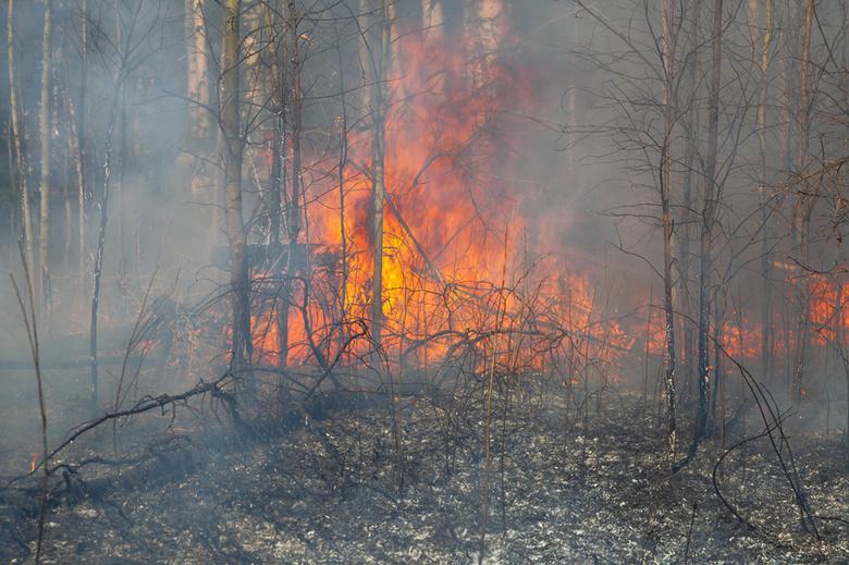 вырабатывают парные лес после низового пожара фото можно